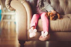 Making the CV of your pet can help you find a pet-friendly rental home.
