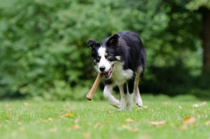 Make sure that your new rental home is in the pet-friendly area