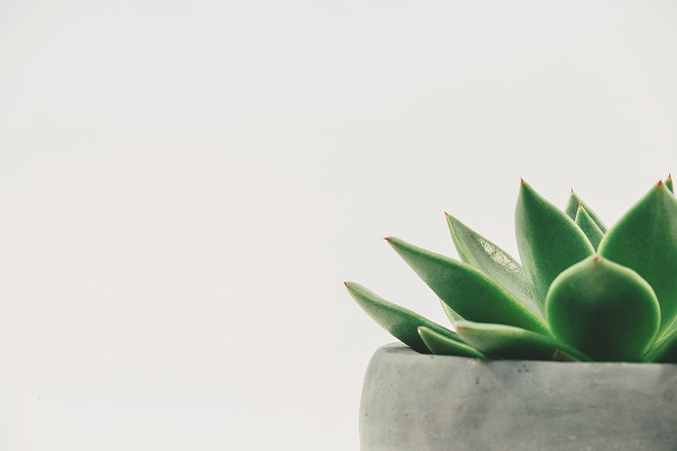 A green plant can be useful for improving the curb appeal of your home.