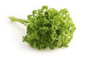 A branch of fresh parsley