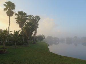 Palm trees in Boca Raton.