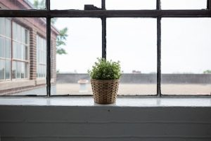 A window and a plant.