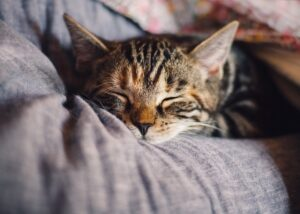 A cat sleeping in a bed while you pet-proof your new home.