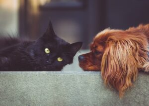 A cat and a dog lying.
