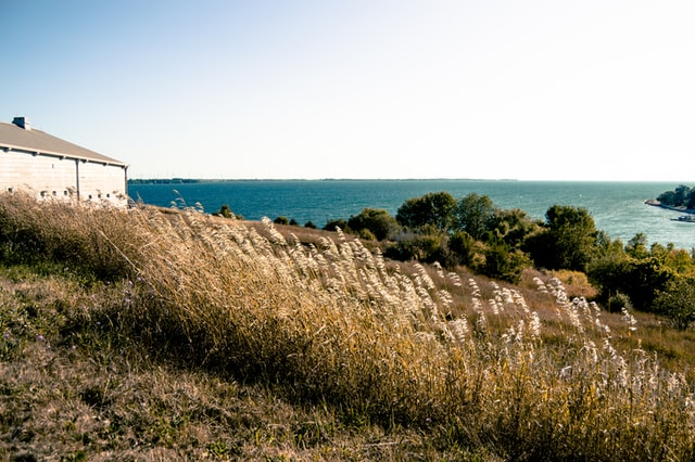 Brown grass and the oceanview